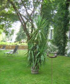 schattiger Platz im Garten mit Liegen